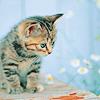 Krazy Kat: wiggles (Pretender)