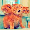 Inky: Image: Cerberus...cat?