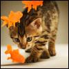 Stock = Autumn Kitty