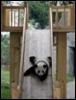secret_panda userpic