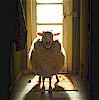 sheep for memeage