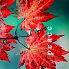 fall peace