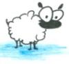sheep?!