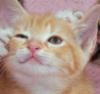 lokksi userpic
