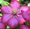 charming_garden userpic