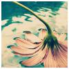 _crimsonroses_ userpic