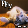 svanderslice: Kitties - Play with me