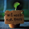 work for food
