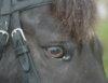 metal_equine userpic
