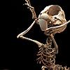 skeleton bugs