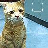 dear_cat