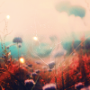 bit_windy userpic