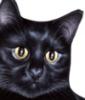 blackcatzen userpic
