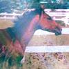 horsemanure userpic