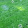 grass_bubbles