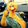 Guido Big Bird