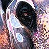 majesticseas userpic