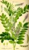 Glycyrrhiza [userpic]