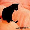 Kitty on pumpkin, Halloween cat