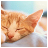 Полосатый Кот: sleeping col