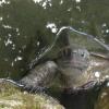 expectant turtle