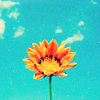 「stock」★ sunbloom