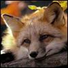 lisica_69 userpic