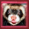 Ferret Sneaky Animal, Dorky