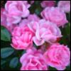Terebas de Rosa [userpic]