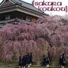 Sakura Koukou
