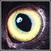кош глаз