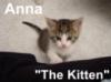 Anna Kitten Looks Up