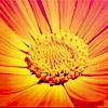 rasmizar: flower