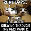 Lolcat - Chewing through restraints