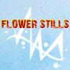 FLOWER ICON CONTEST