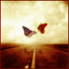 Sofy: Nature -- butterflies
