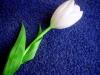ichbinseins userpic