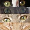 Leo: cat eyes
