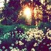 0o_faerie userpic