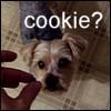 cookie?