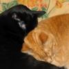 AmyCat: Gryphon&Bjorn