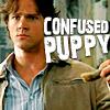 Nikki: Confused Puppy