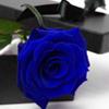 Vitamin C: Blue Rose