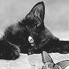 shrewcat userpic