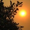 Orange Sun, fire