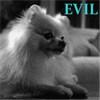 evil puppy