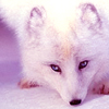keltickefiwolf userpic