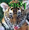 wacky_tigger