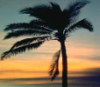 date_palm userpic