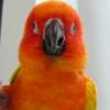 featherfrazzle userpic